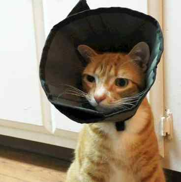 marm cone of shame