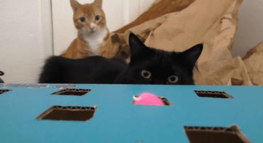 I spy with my cat eyes...