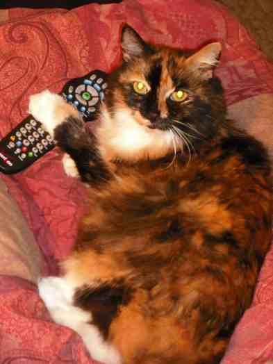 """""""We're watching Animal Planet!"""" :)"""