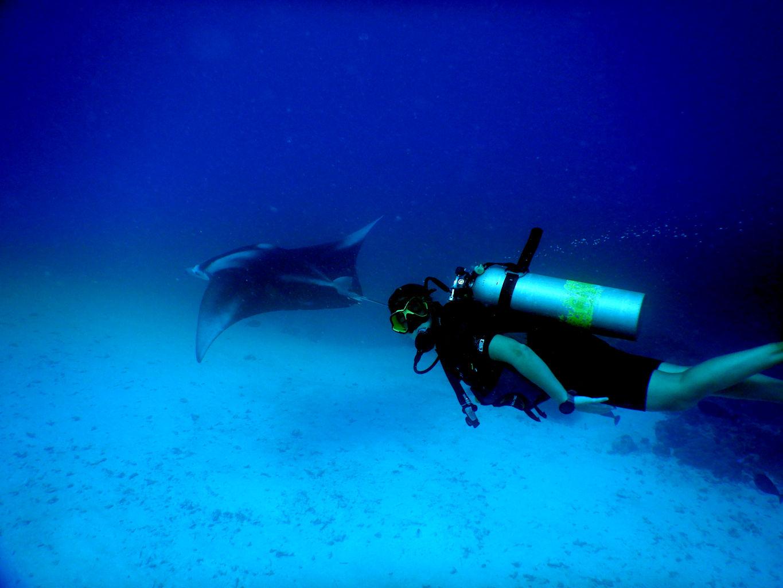 Nadando con mantas raya