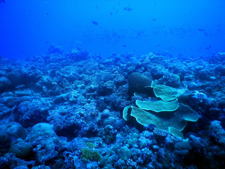 Arrecife de coral en Blue Corner