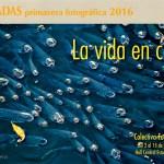 """Exposición """"La vida en color"""""""