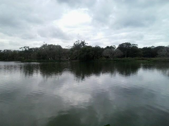 Colpacaranda - 2015