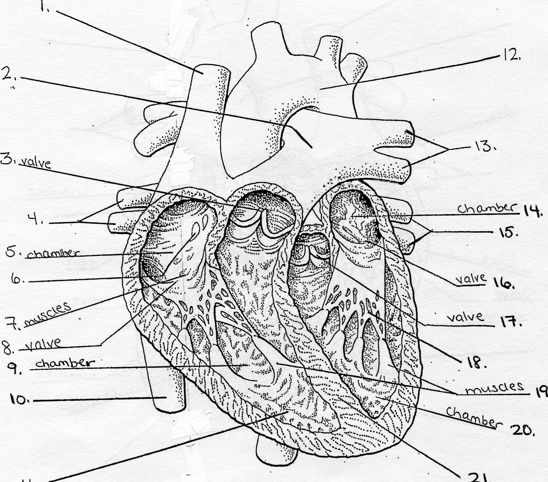 Blank Heart Diagram Quiz, Blank, Free Engine Image For