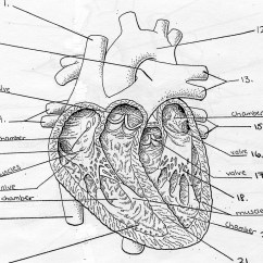 Label Heart Diagram Worksheet Answers Er For Social Networking Site Blank Quiz Free Engine Image