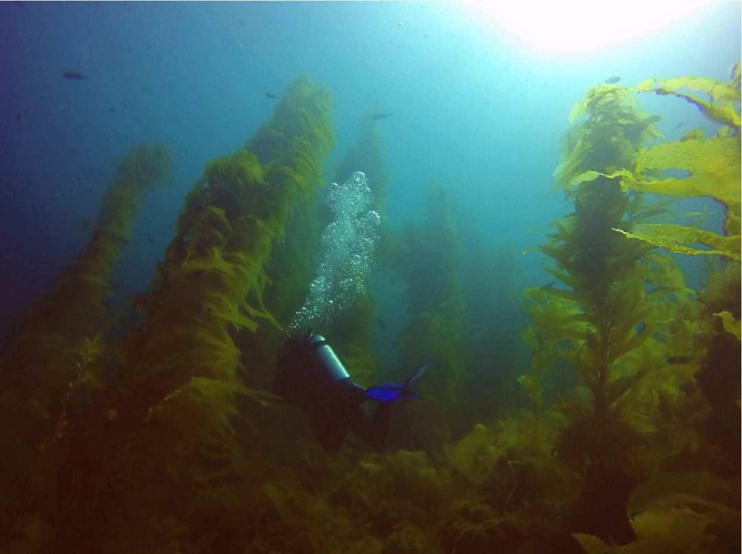 Following Jenn into the kelp