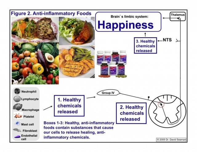 inflammation and nutrition neurochemistry