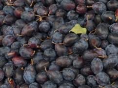 prunes-fresh