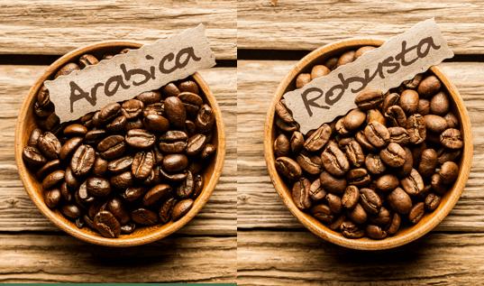 Arabica vs Robusta coffee beans Coletti Coffee