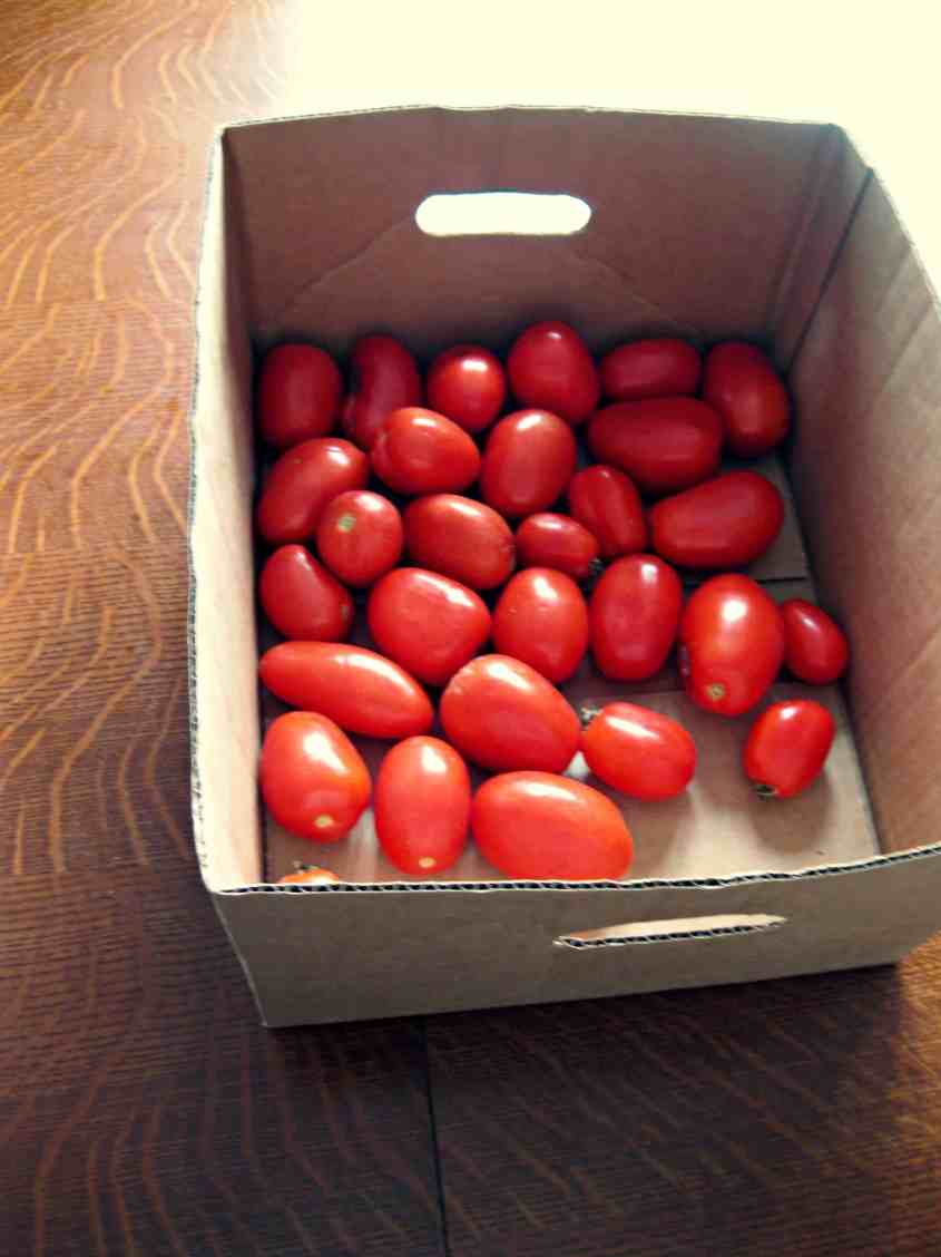good tomatoes make good neighbors