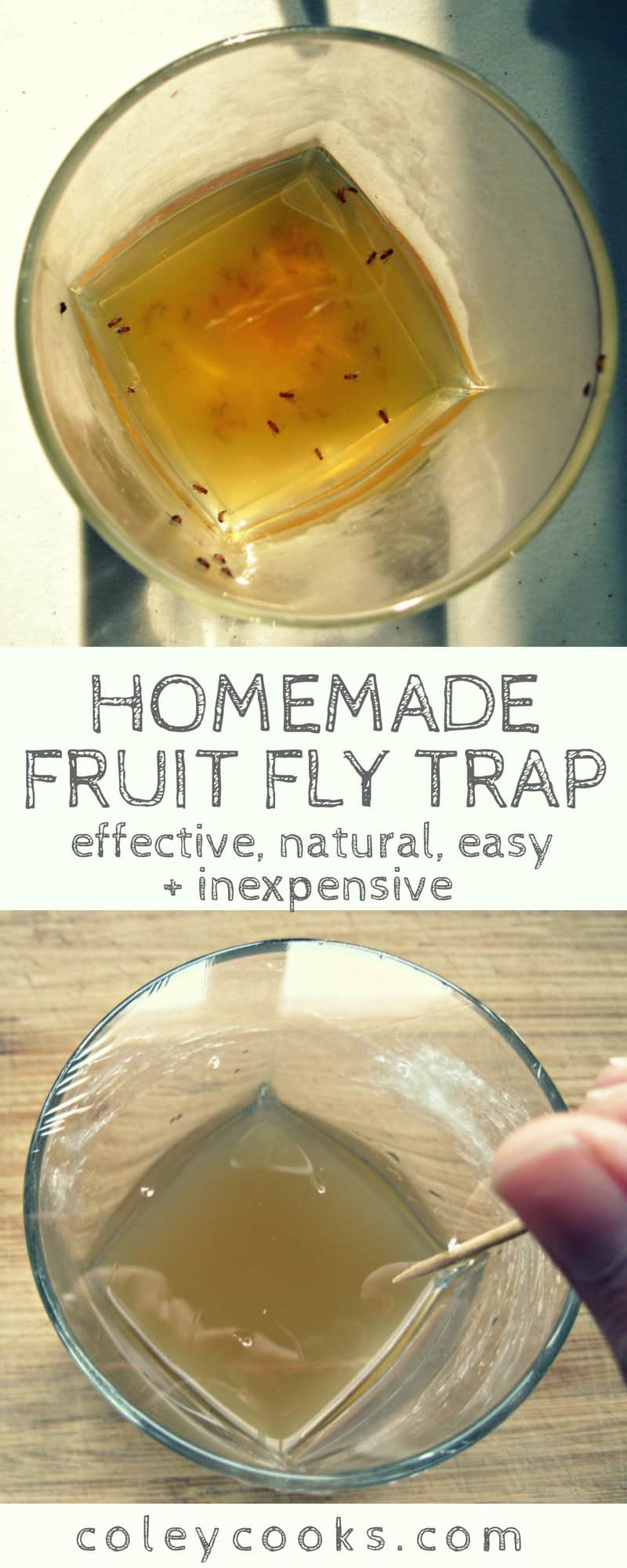 Where Fruit Flies go to Die | Coley Cooks