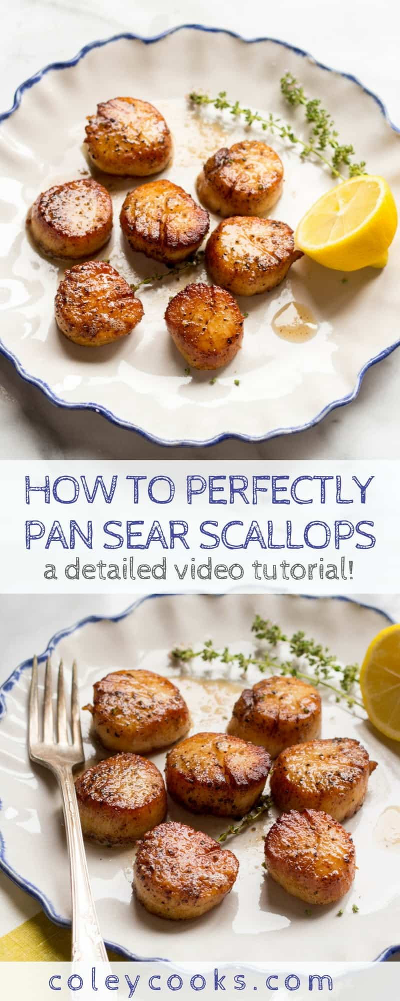 PAN SEARED SCALLOPS | Easy video tutorial on how to perfectly pan sear scallops! This simple technique produces scallops that are browned and caramelized on the outside, tender and perfectly cooked in the middle. #paleo #seafood #glutenfree | ColeyCooks.com