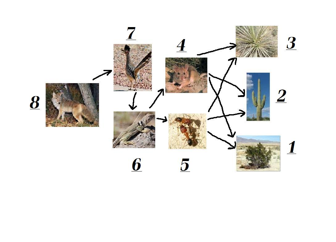Desert Food Web Ecosystem