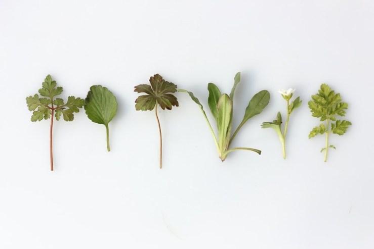 Herbs Dictionary… B