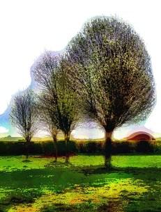 3-trees2
