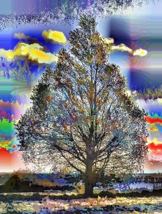 worlds-firs-tree