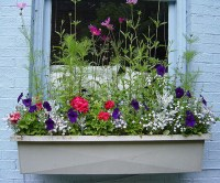 Window Box Flower Ideas