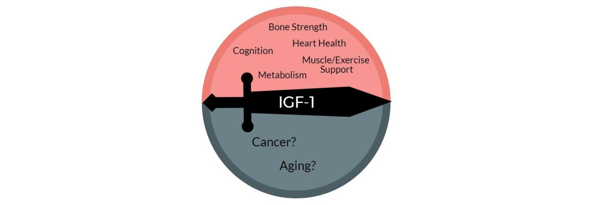 IGF-1 - The Complex Double-Edged Sword of Health