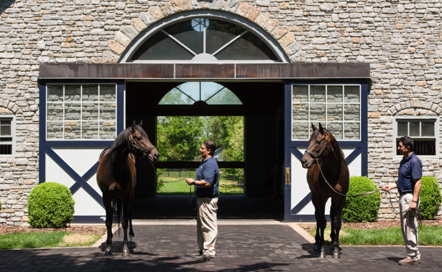 Father and son - Mo Town and Uncle Mo at Coolmore America