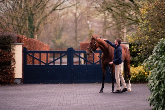 Saxon Warrior with handler at Coolmore
