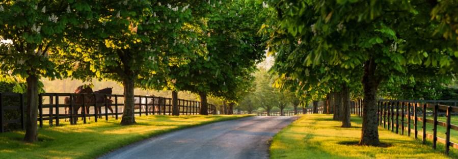 Stud Farm avenue in morning light