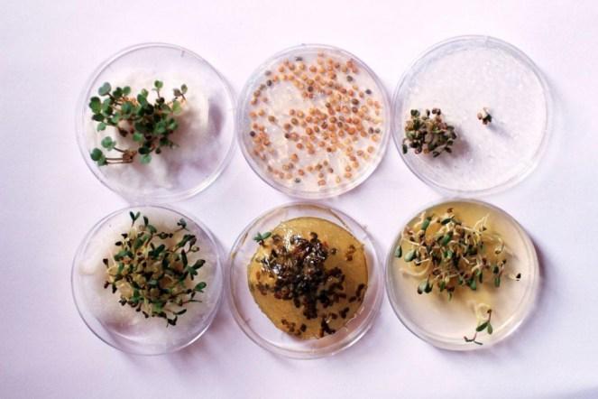 chloe-rutzerveld-edible-growth-12-970x647-c