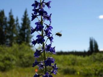 Documenting pollinator visitation