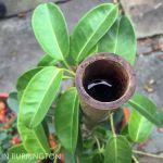 Bamboo garden stakes