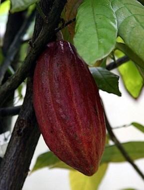cocoa-skin-benefits.jpg