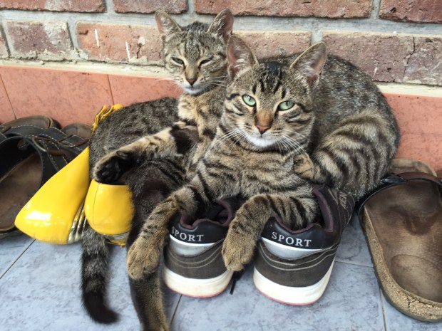Kittens cuddling on some shoes at Mama Mackrine's