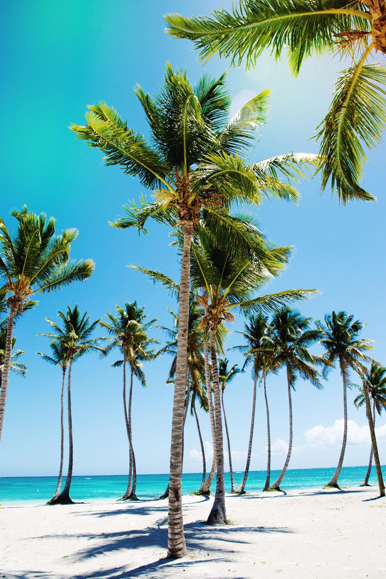 Summer Beaches Palm Trees
