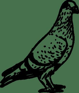 pigeon-153830_960_720
