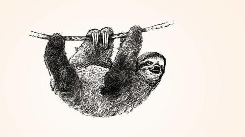 sloth hanging from a branch