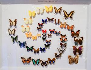 Collections of butterflies from around the world.