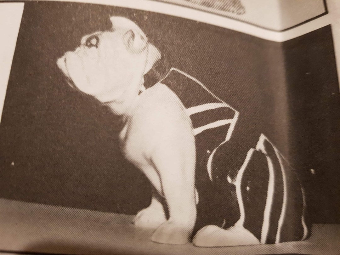 Royal Doulton Bulldog advertising