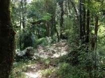 Hiking through the Raetea Forest.