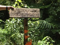 Sign in the forest.