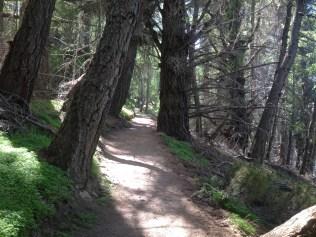 Walking track to the summit of Mt John.