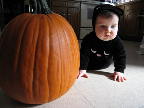 phoebe_cat_pumpkin.jpg