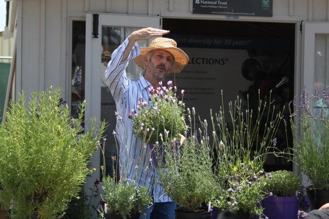 downderry lavender