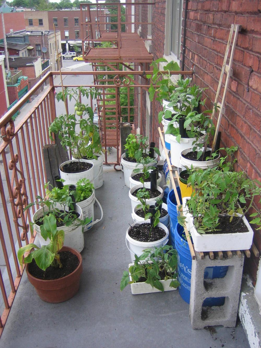 Permablitz This Balcony Gardening Workshop  COLLECTIVE PSYCHE