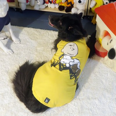Tosh wearing the Yellow Charlie Brown with sleeping Snoopy T-shirt