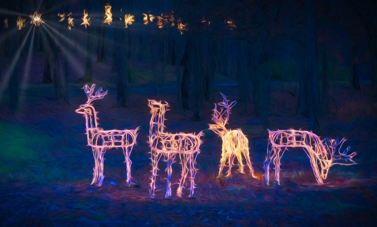 Lighted deer figures in woods looking to the lit stars