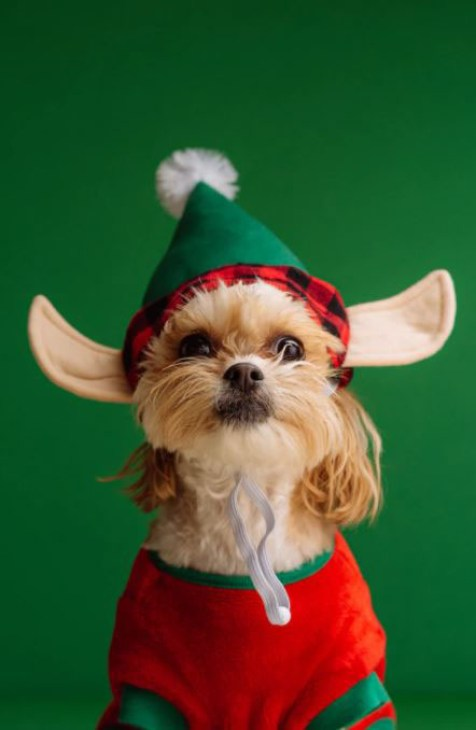 Cute Christmas dog photo with elf hat