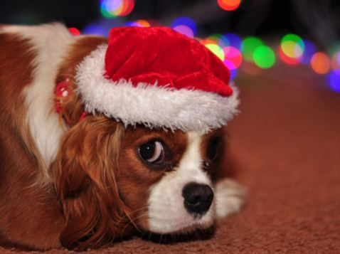Cute dog with Santa Claus hat