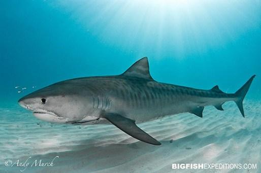 The Beauty Of Sharks