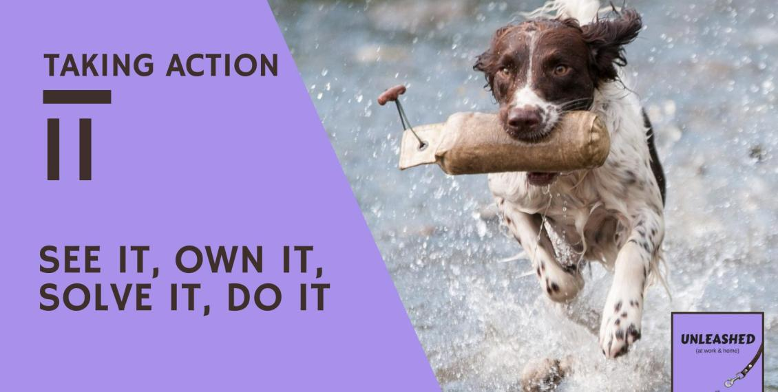 Dog retrieving bumper from river