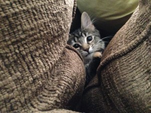 New hiding spot...between the couch cushions.