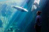 Seward SeaLife Aquarium, Seward, Alaska, August 2015.