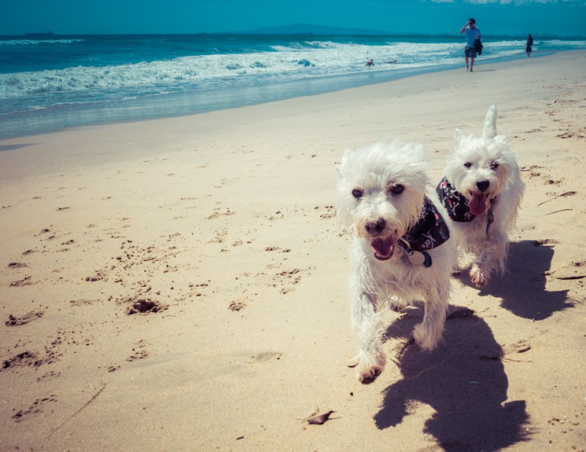 Los Angeles Beach Guide: Huntington Dog Beach